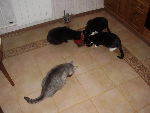 Если у вас есть животные, то керамогранитная плитка – идеальное решение для кухни