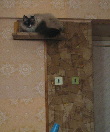 Фото ковролина на стене в интерьере