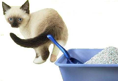 Когда животное скребет пол возле лотка с наполнителем, проверьте, насколько он чист