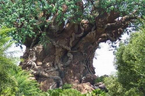 Португальский пробковый дуб