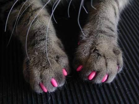 Силиконовые колпачки станут надежной защитой от кошачьих когтей