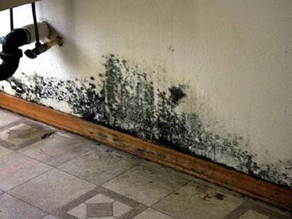 Учитывая то, что грибок может переходить на стены, обработку производят в комплексе