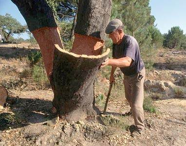 Заготовка коры пробкового дуба